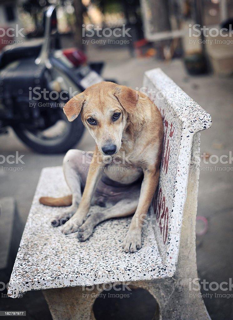 thailand dog stock photo