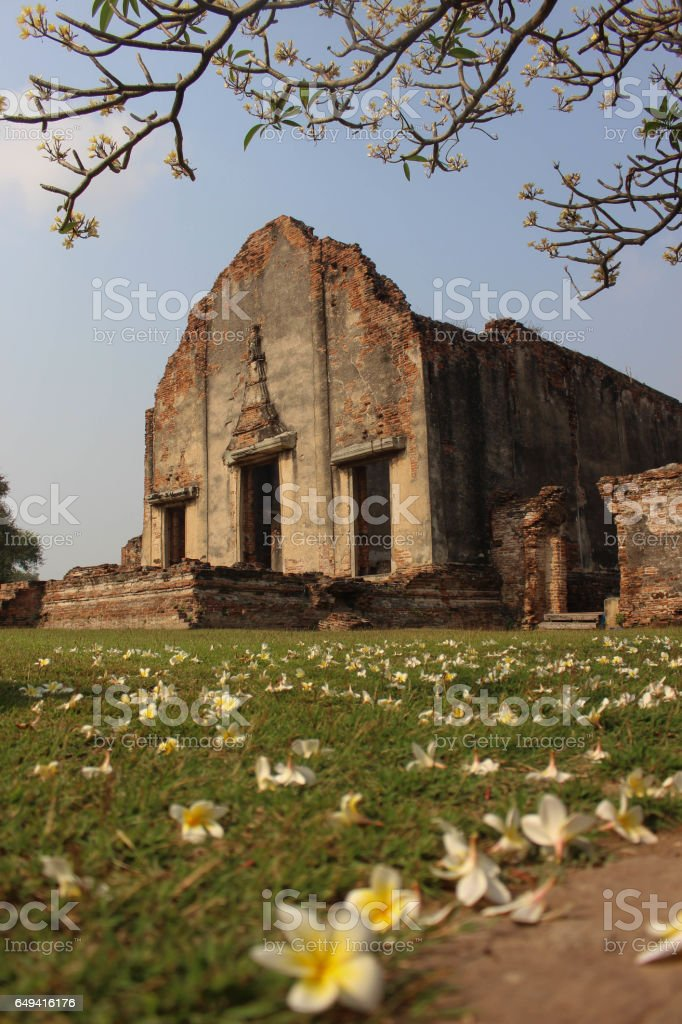 Thailand historical park LOPBURI,ancient building,with frangipani front. stock photo