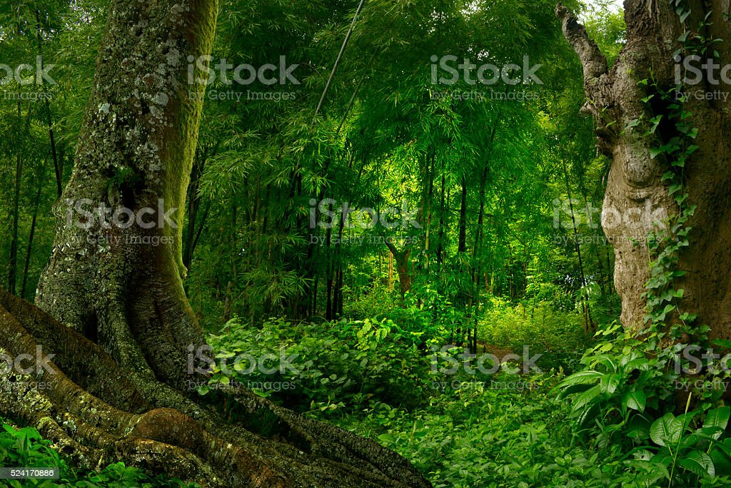 Thailand jungle stock photo