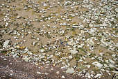 Thames foreshore with shopping trolley