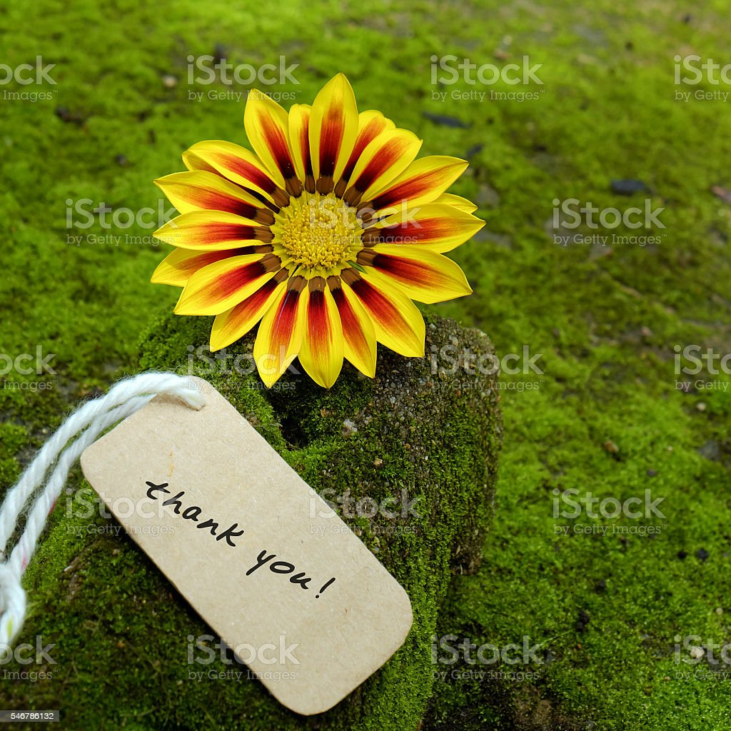 Thank you background, daisy flower stock photo