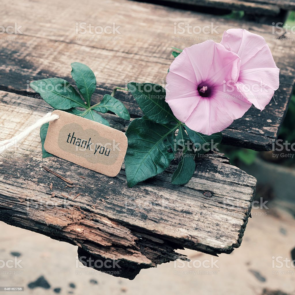 Thank you background, violet flower stock photo