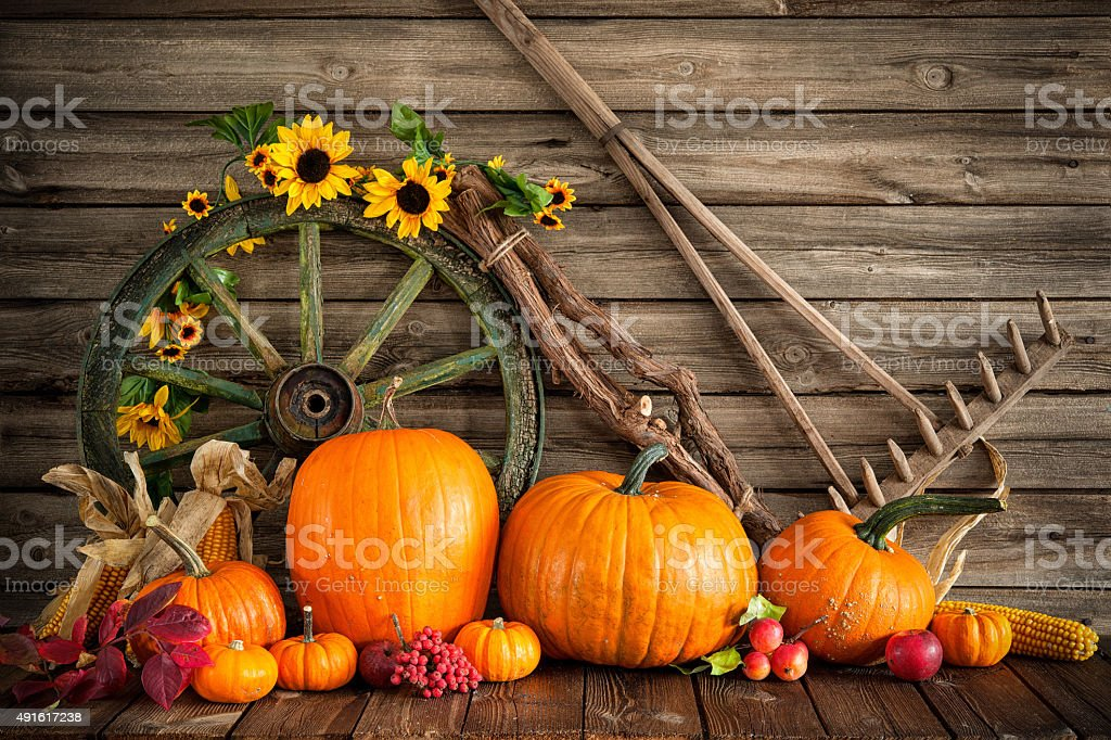 Thanksgiving autumnal still life with pumpkins stock photo