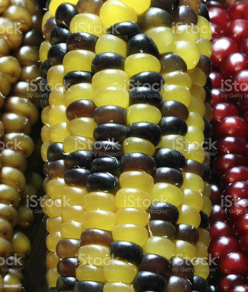 Thanksgiving Corn stock photo