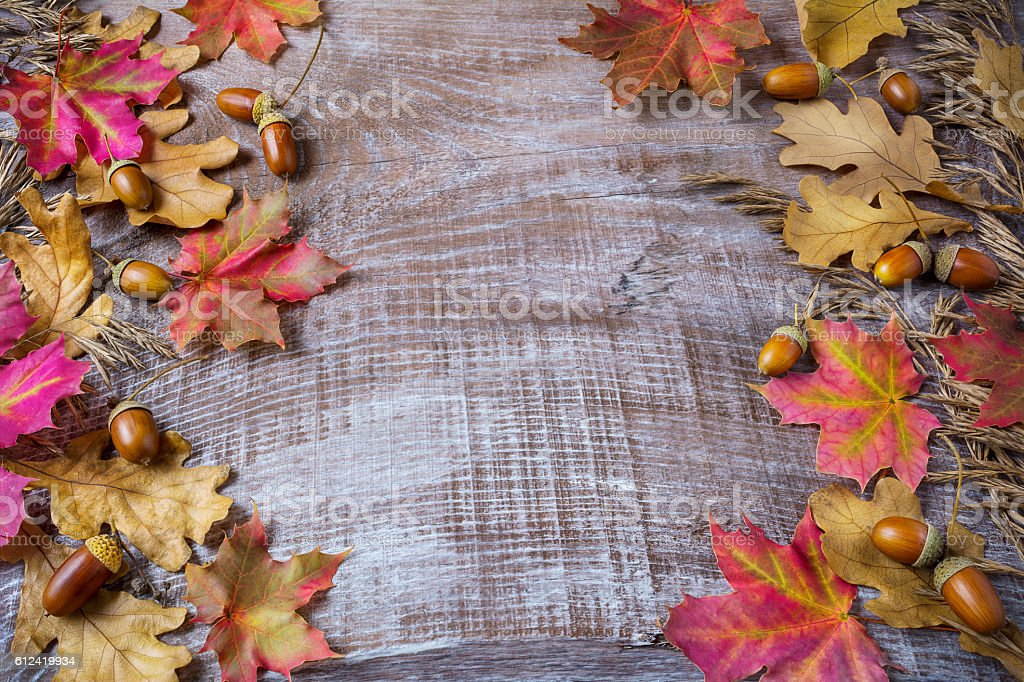 Thanksgiving  greeting background with rye, acorn and fall maple stock photo
