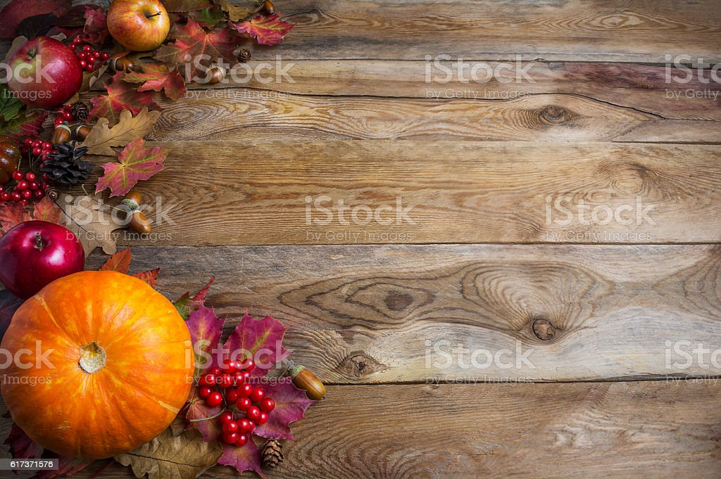 Thanksgiving  or fall greeting background with orange pumpkins a stock photo