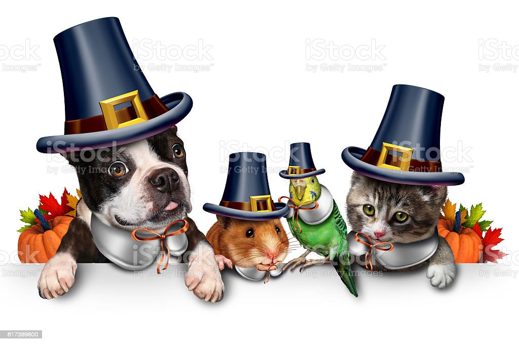 Thanksgiving Pet Celebration stock photo