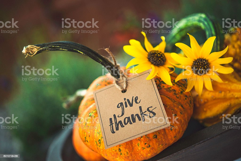 Thanksgiving still life background with pumpkins, gourds and message stock photo