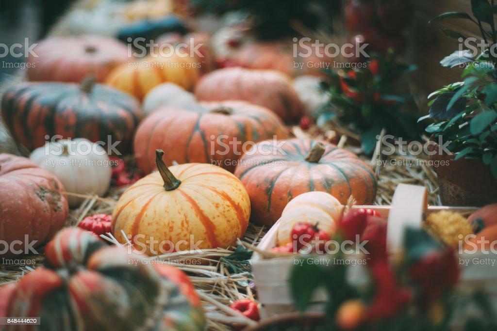 Thanksgiving still-life with pumpkins and marrows stock photo