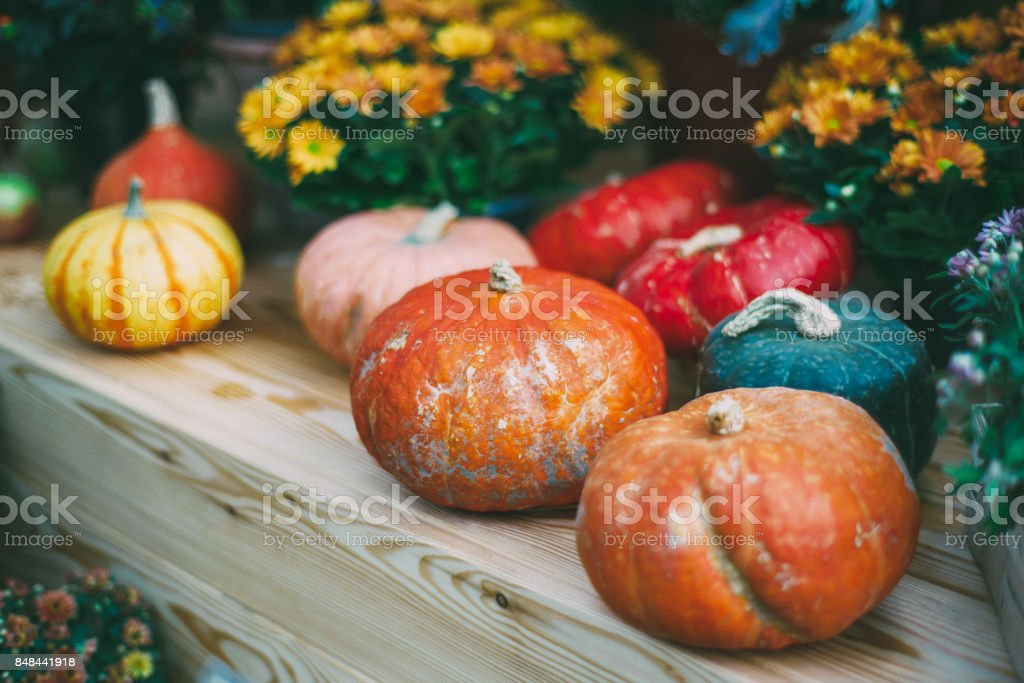 Thanksgiving still-life with pumpkins stock photo