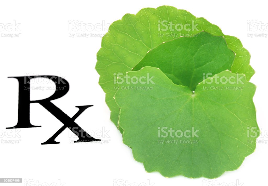 Thankuni leaves as medicine stock photo