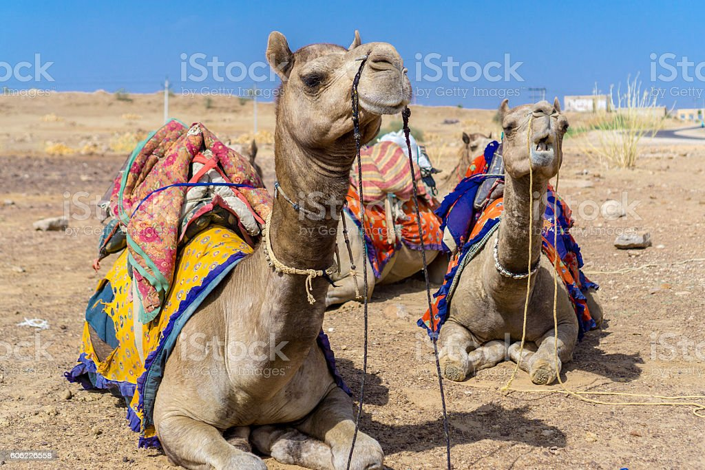 Thar Desert, Jaisalmer, India stock photo