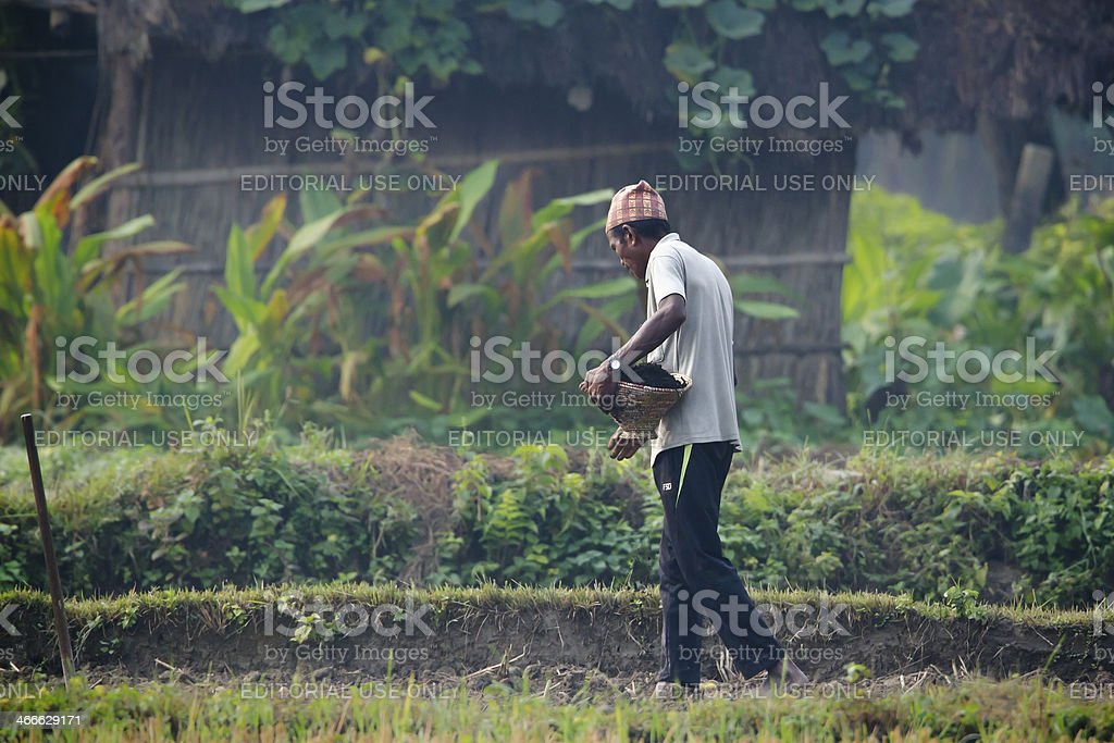 Tharu man strewing seeds in fields stock photo