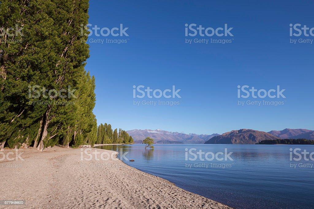 That Wanaka Tree and Lake Wanaka shoreline, New Zealand stock photo