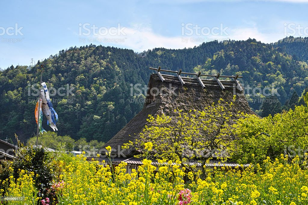 Thatched roof and carp and rape blossoms stock photo