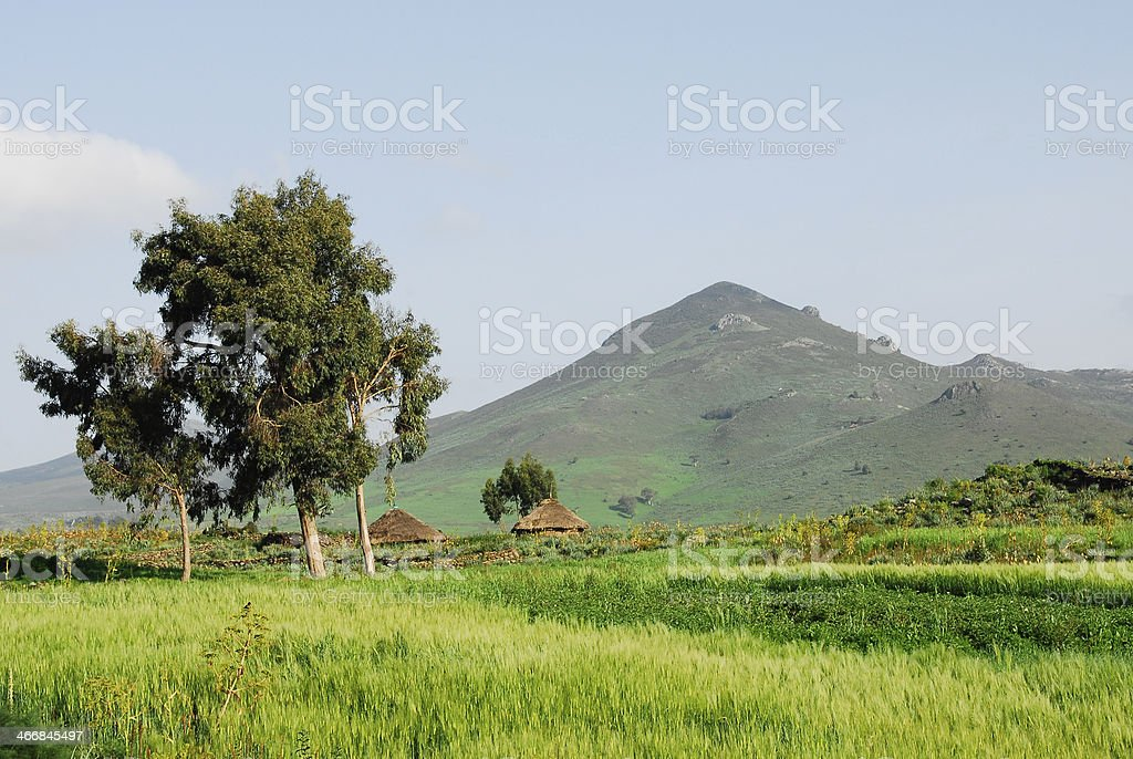 Thatched roof huts, Ethiopian highlands stock photo