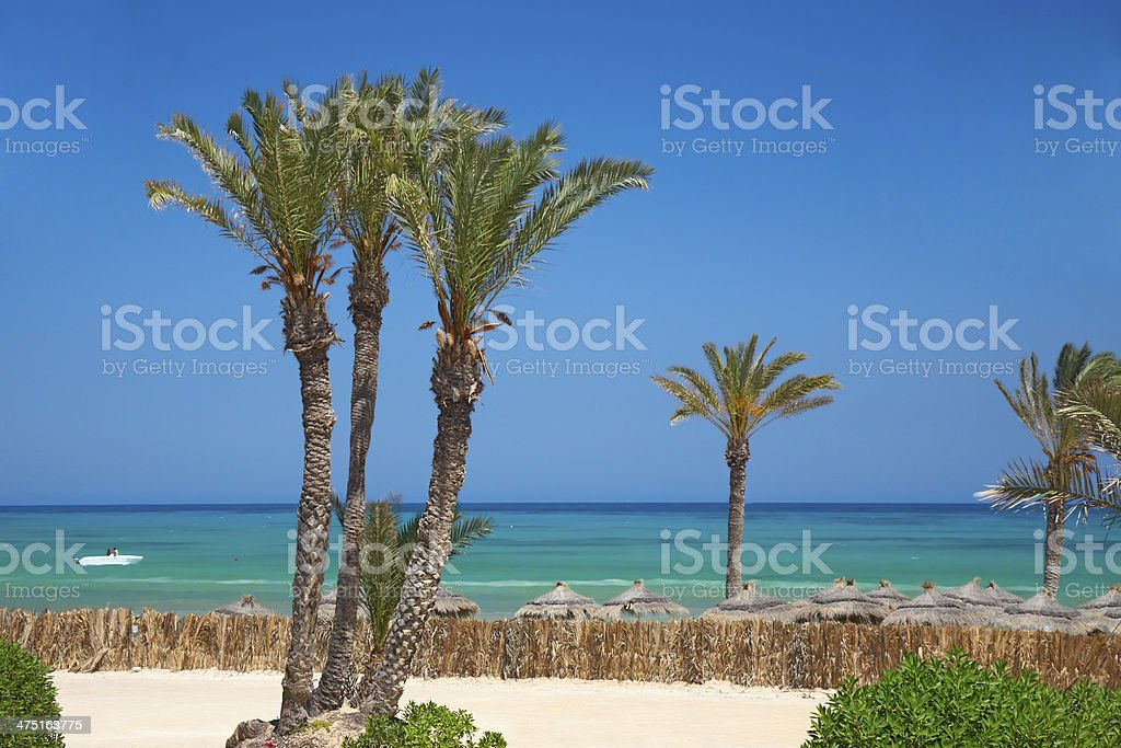 thatched sunshades and palm trees stock photo