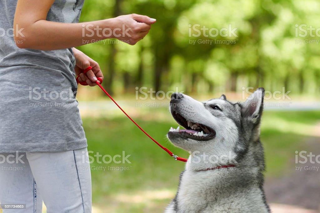 That's a good boy stock photo