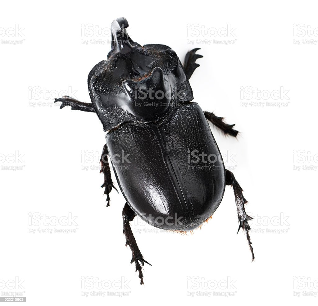 That's one tough beetle stock photo