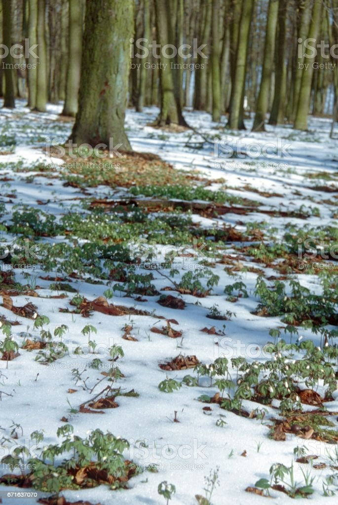 Thaw, spring is coming stock photo