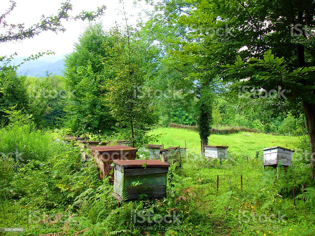 The abandoned apiary in mountains summer day stock photo