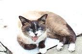 The aggressive cat