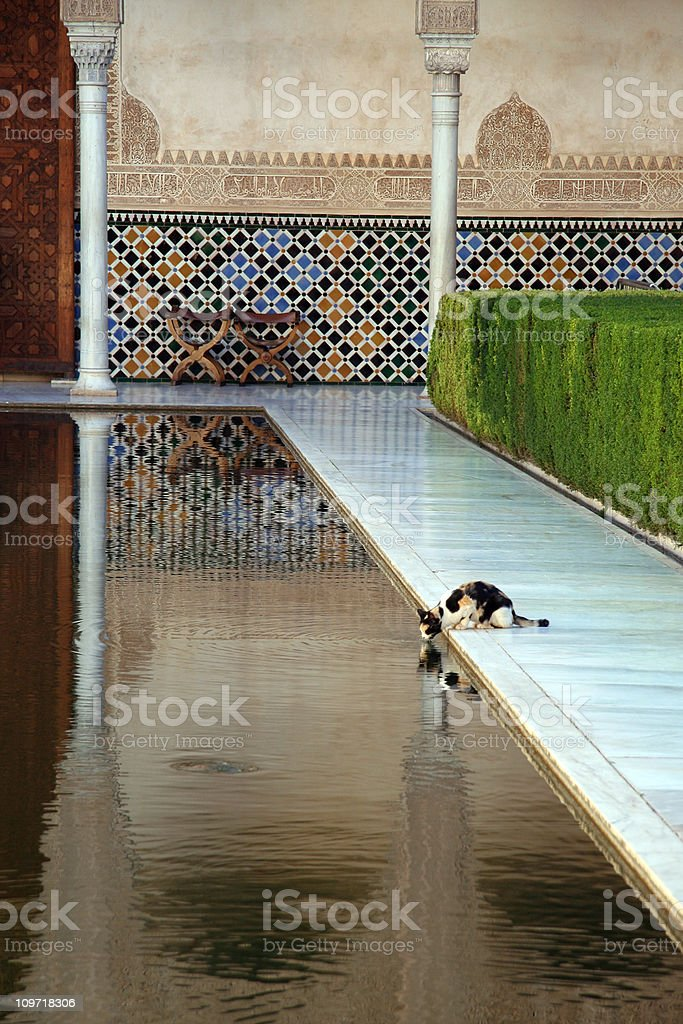 The Alhambra cat royalty-free stock photo