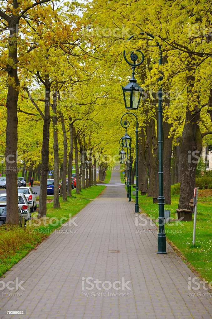 The alley with trees and lanterns (lamps) stock photo