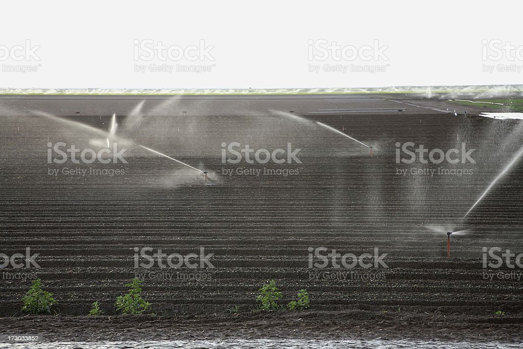 The All-Important Role Of Irrigation And Water In Agriculture. stock photo