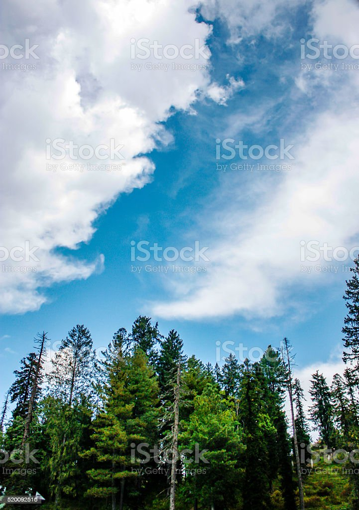 The alpine forest with cloudy blue sky at Gulmarg stock photo