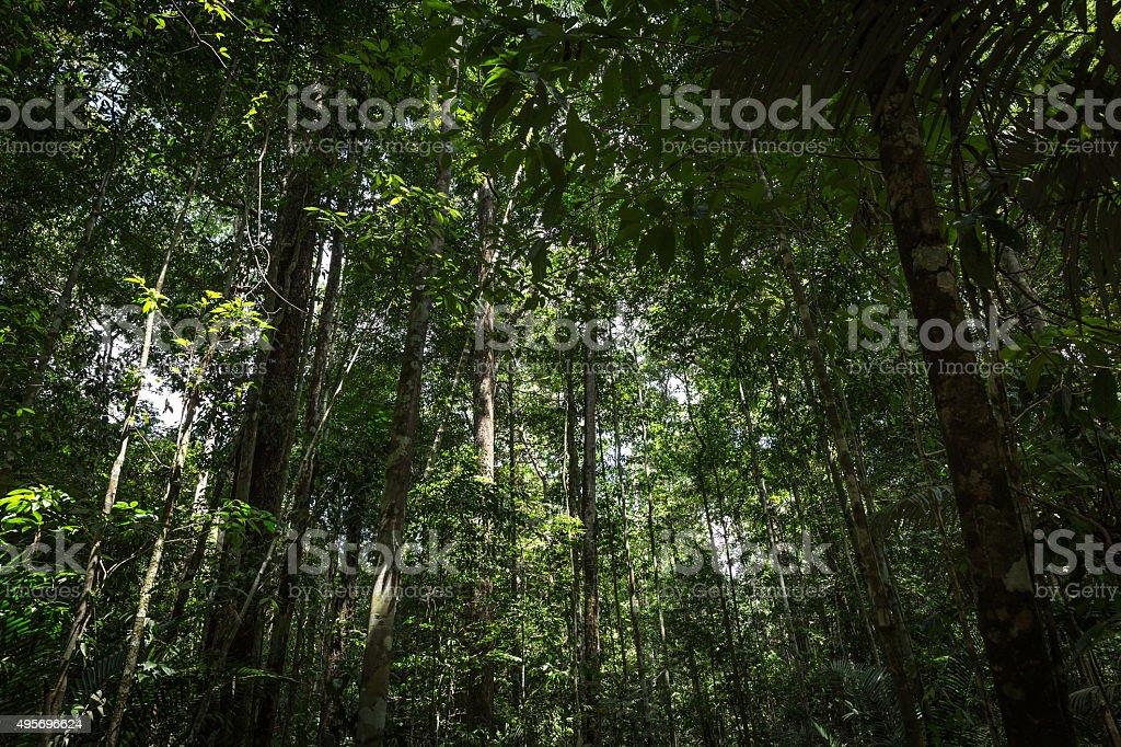 The Amazon jungle, Brazil stock photo