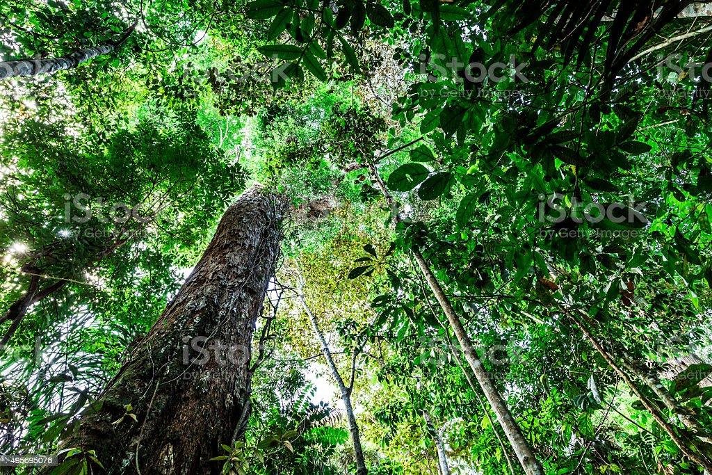 The Amazon rainforest, Brazil stock photo