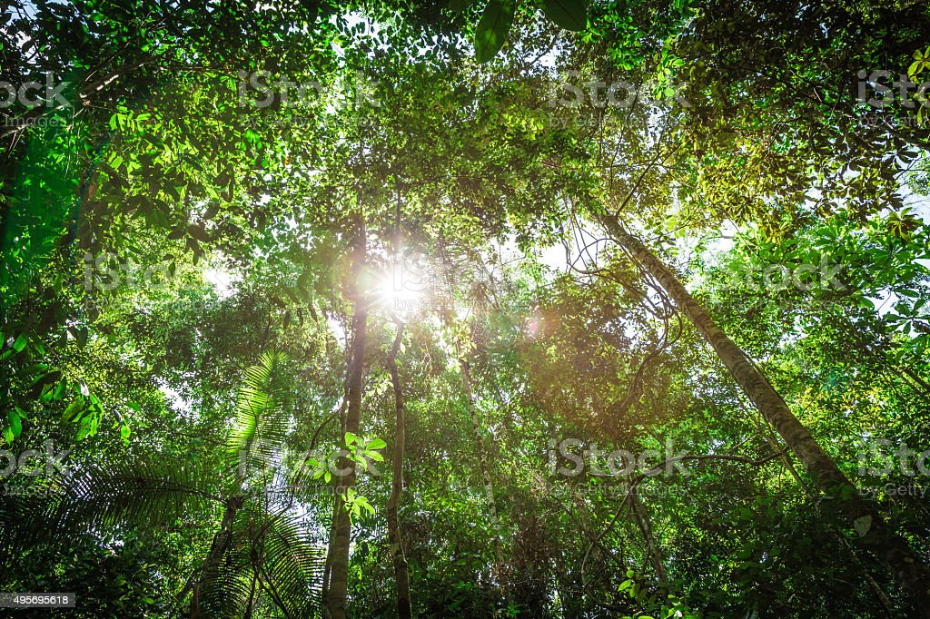 The Amazon rainforest, Brazil stock photo