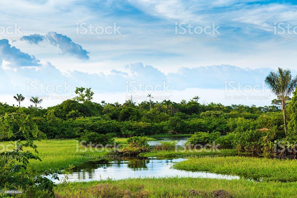 The Amazon Wetland in Brazil stock photo