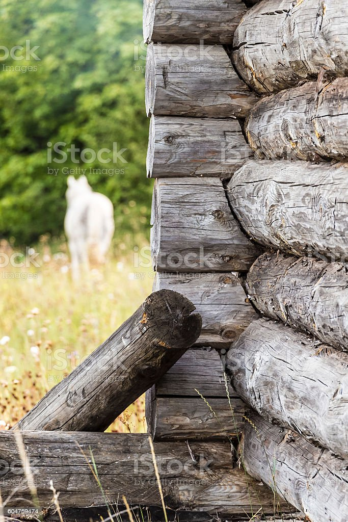 The angle of the old log house stock photo