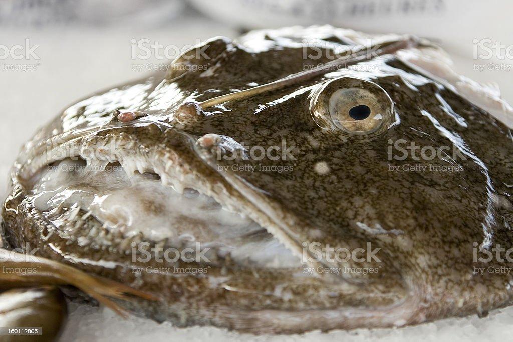 the angler   ( lat. Lophius piscatorius ) stock photo