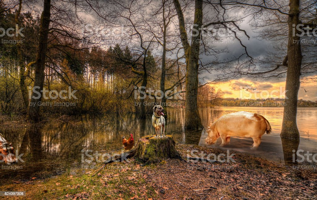 The animal lake stock photo