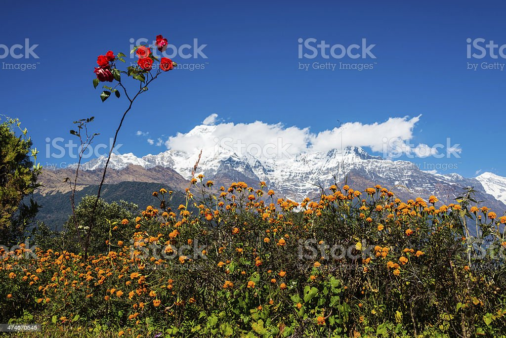 The Annapurna South and the Hiunchuli royalty-free stock photo