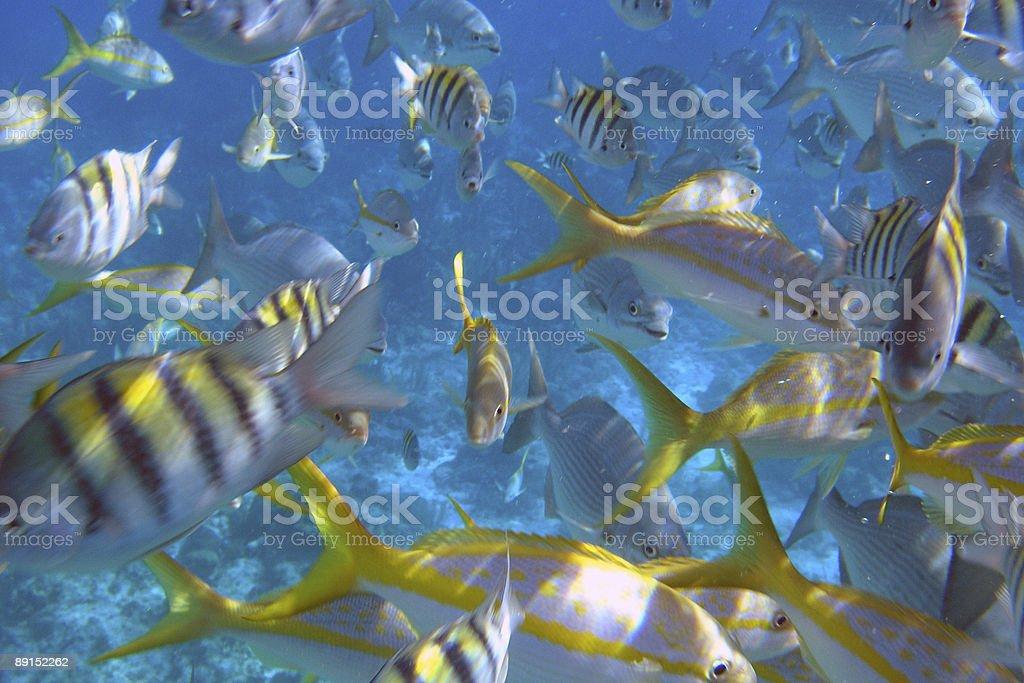 The Aquarium royalty-free stock photo