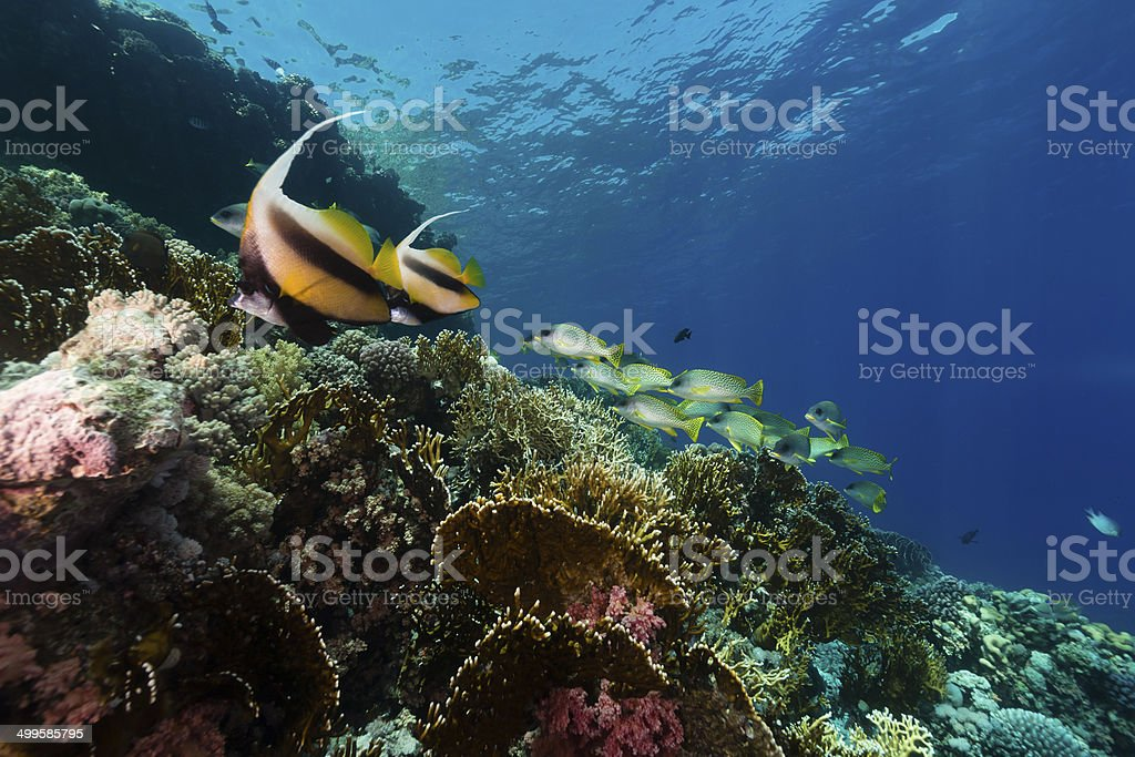 The aquatic life in the Red Sea. stock photo