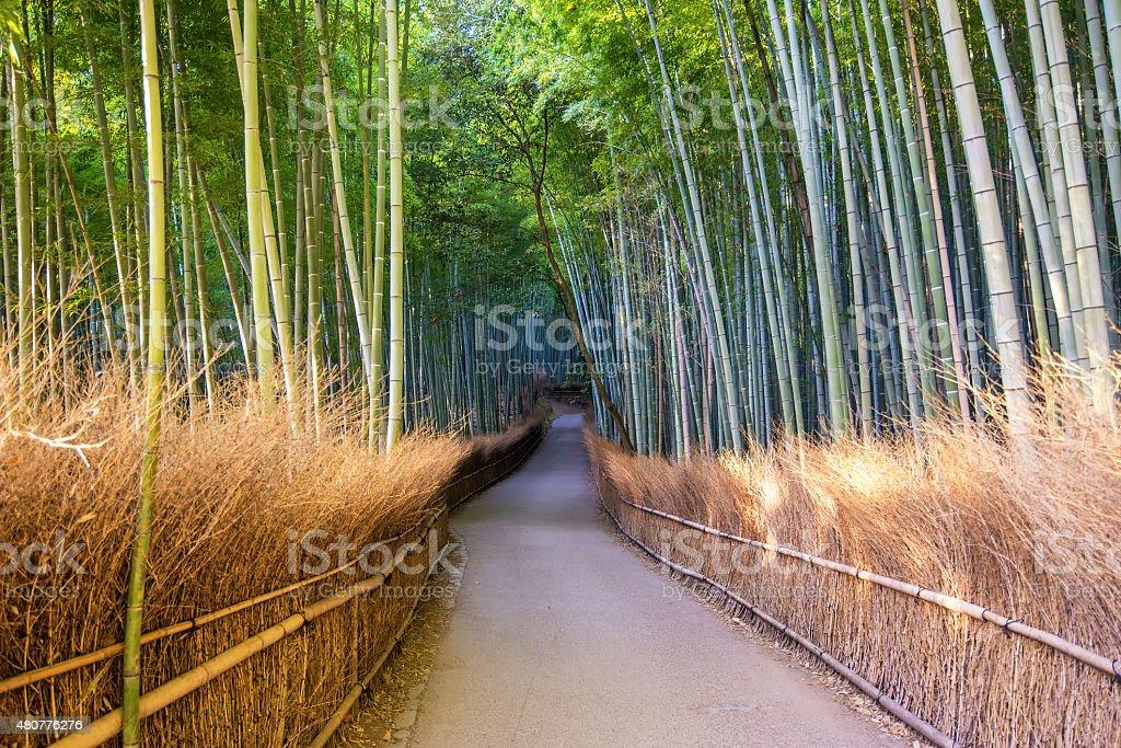 The Arashiyama Bamboo Grove of Kyoto, Japan. stock photo