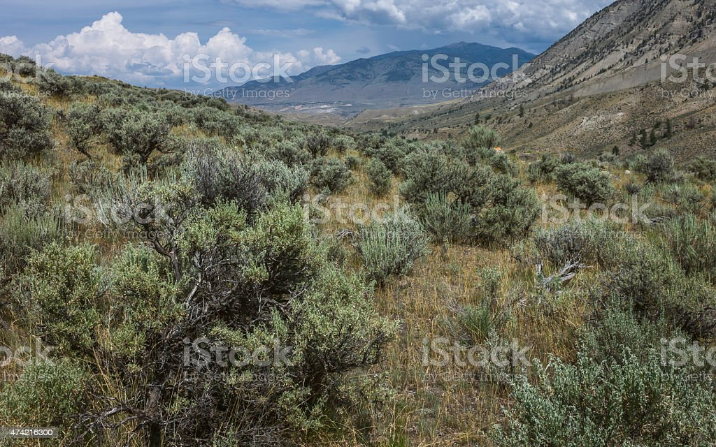 The aridity of Yellowstone parkland in summer, Montana, USA. stock photo