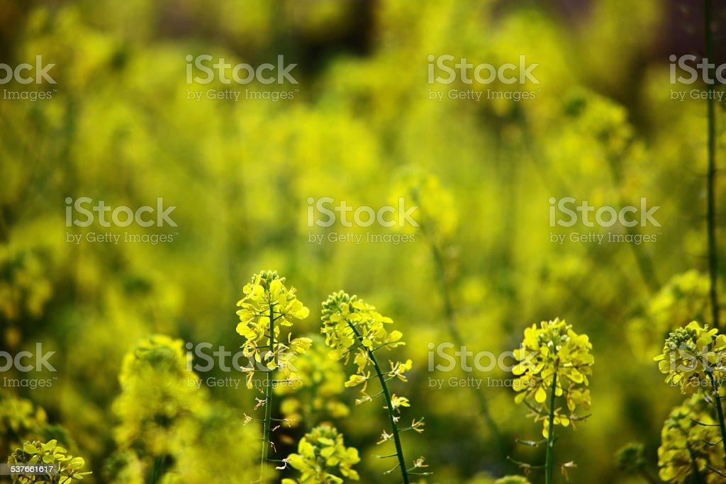 Прибытие весны Стоковые фото Стоковая фотография