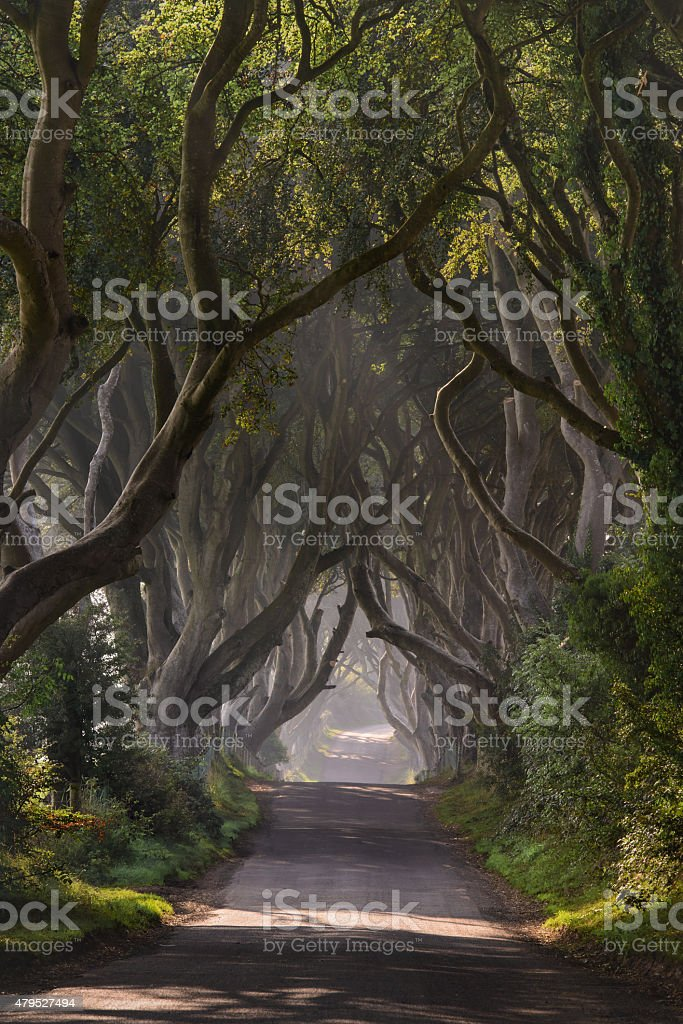 The Atmospheric Dark Hedges stock photo