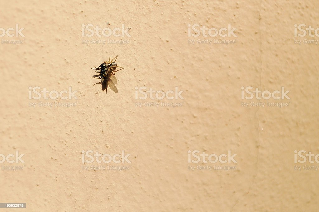 The attack of the spider royalty-free stock photo