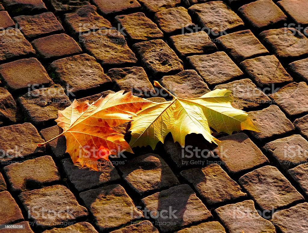 The autumn leaves on  pavement royalty-free stock photo