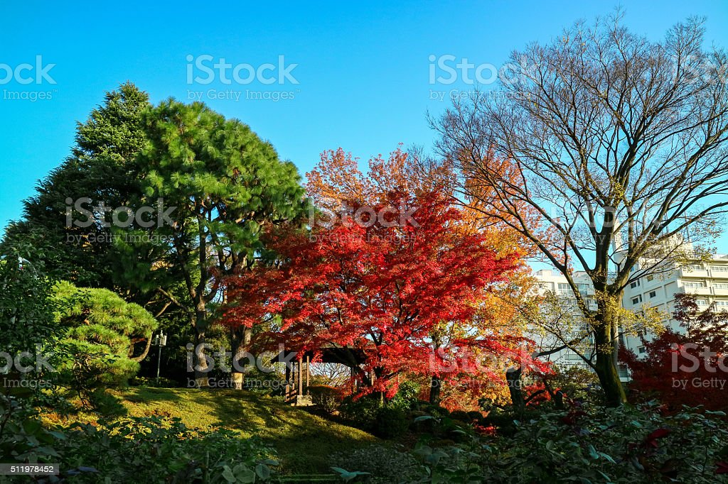 The autumn leaves stock photo