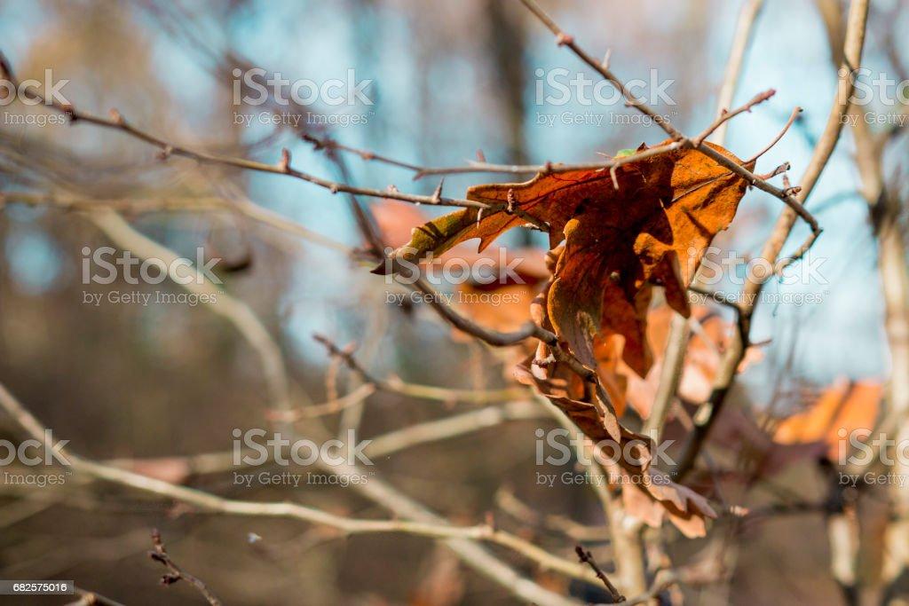 the autumn stock photo