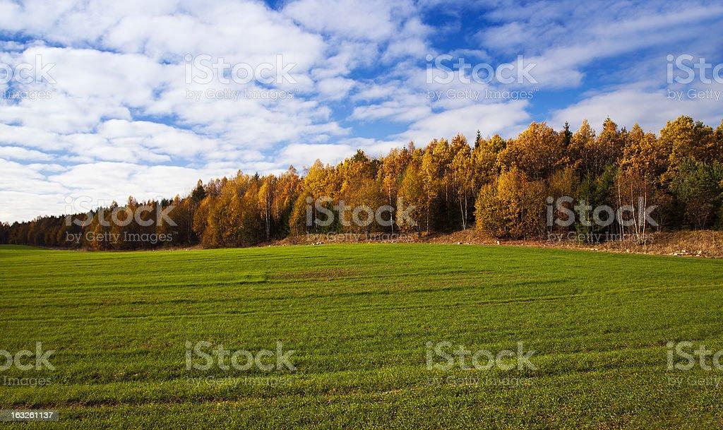 the autumn wood royalty-free stock photo