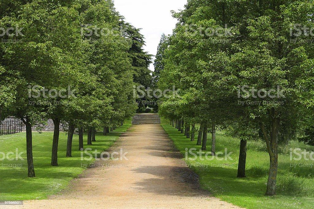 The avenue royalty-free stock photo